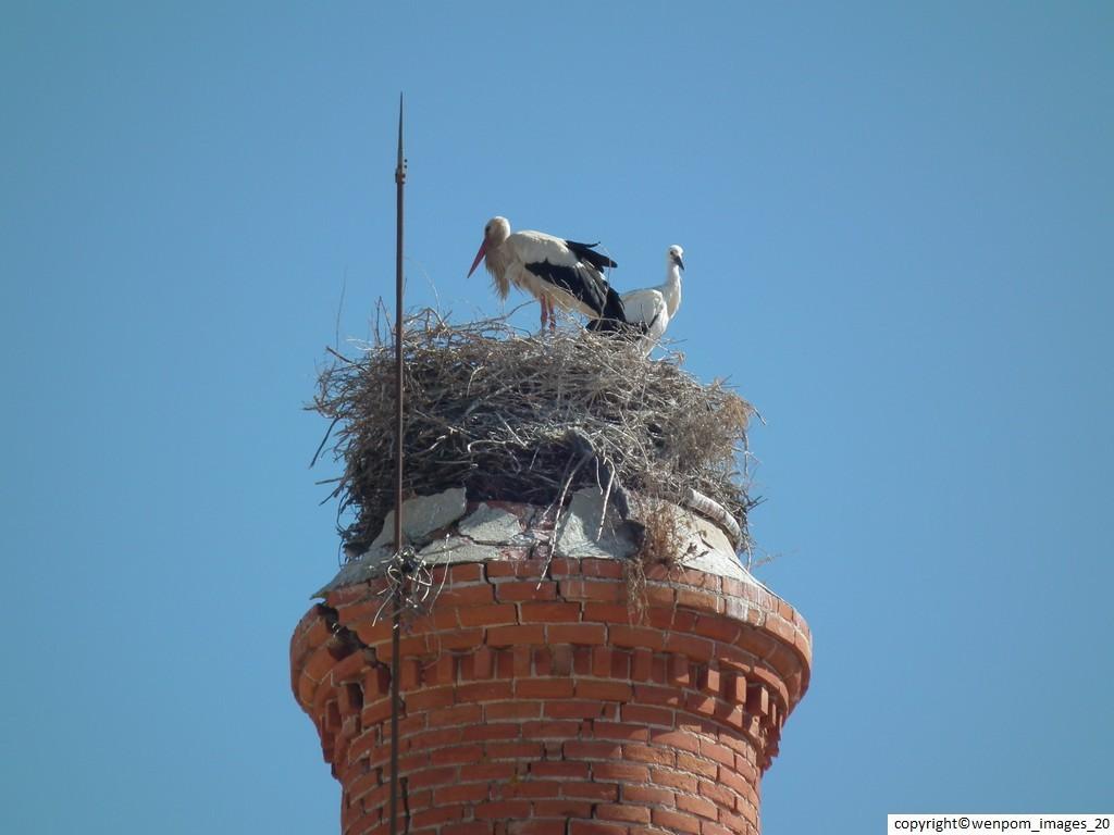 Storks 008